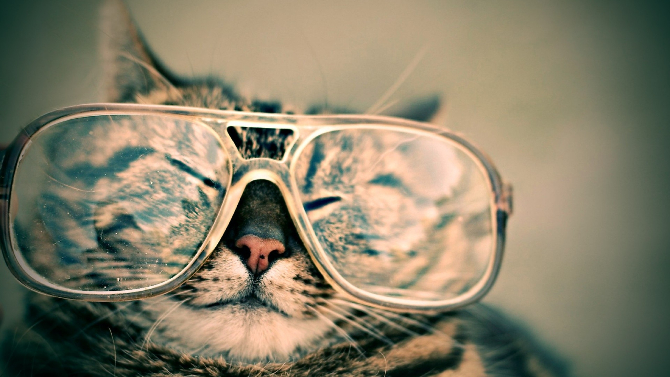 cat with glasses jpeg