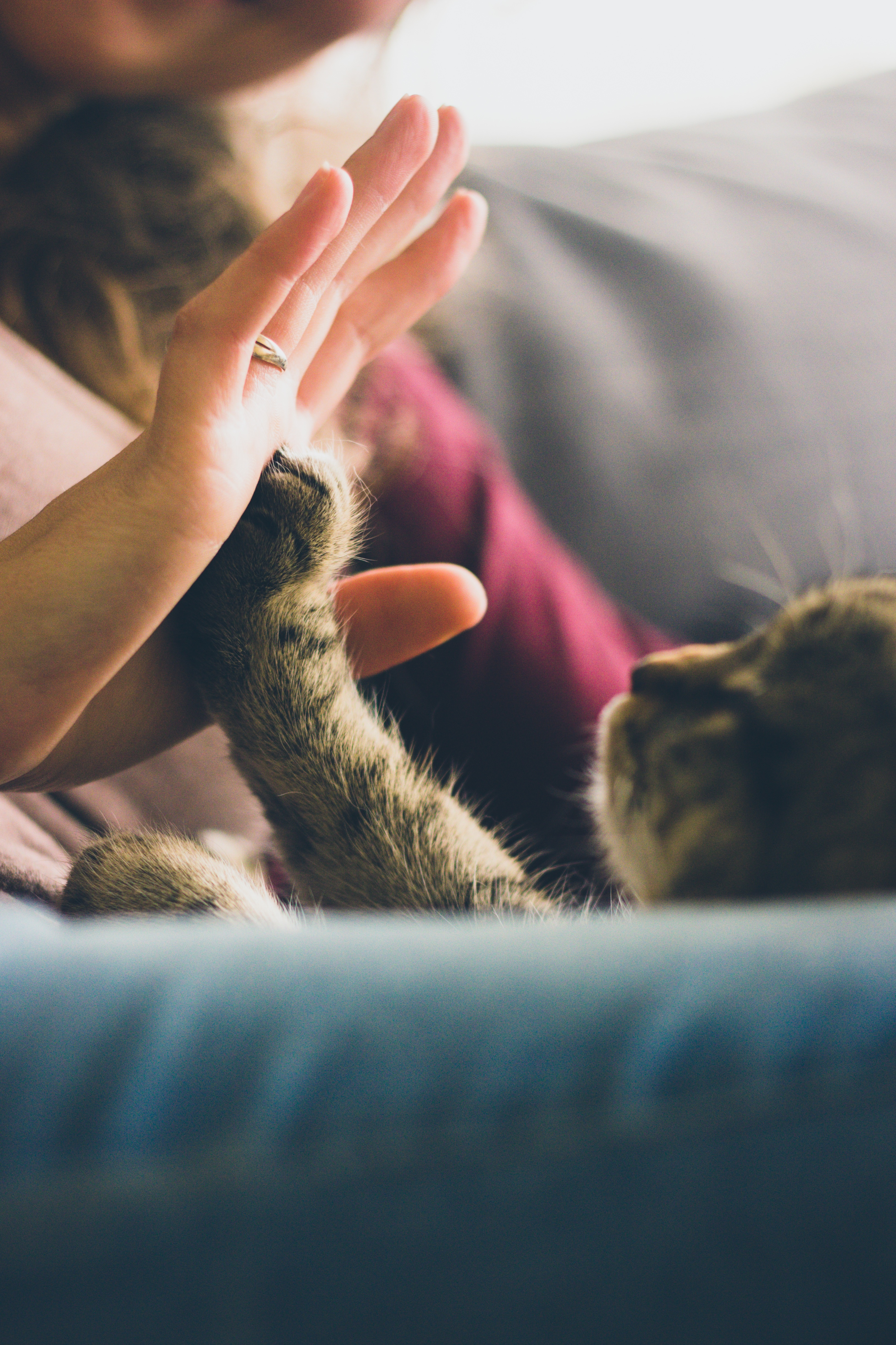 high five with cat jpeg